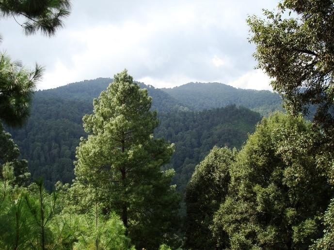 Imagen 2. Bosques, factores determinantes en la mitigación del cambio climático. (JJARR)